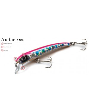 Molix Audace 55